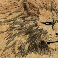 12 Eugenia De León - Lion sketch-f
