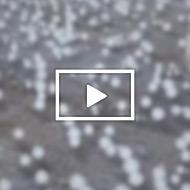 video_9